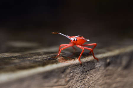 closeup view of tiny red insect 版權商用圖片