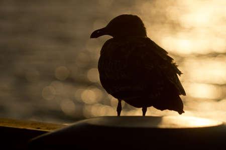 Profiel uitzicht zeemeeuw genomen op Seal Beach. Californi