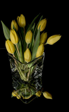 Yellow tulips isolated on black background Stock Photo