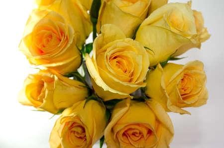 Boquet de roses jaunes sur fond blanc backgorund Banque d'images - 13947804