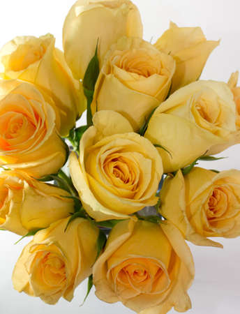 Boquet of yellow roses on white backgorund Stock Photo - 13947226