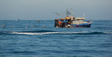 Birds chasing commercial fishing boat off the coast of California photo