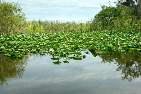 Scenic landscape Florida Everglades photo