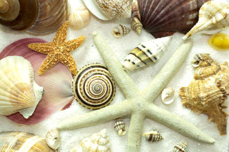 Seamless background pattern of seashells, starfish, sea snails, on a bed of white sand photo