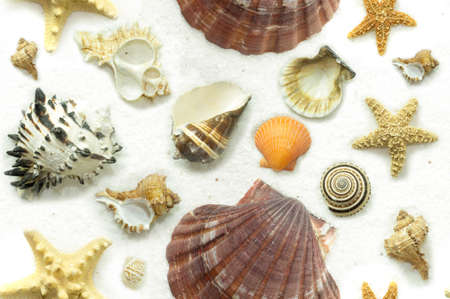 Seashells, sea snails, and starfish on a background of white sand