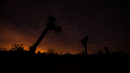 Joshua Trees in silhouette under the Mlky Way at Joshua Tree National Park photo