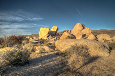 joshua tree national park: Joshua Tree National Park at Sunset Stock Photo