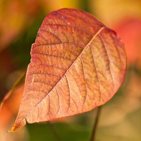 秋の葉色とディテール正方形トリミングのクローズ アップ