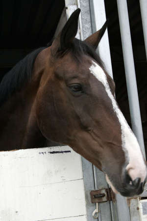 perky: Brown and white horse in stable