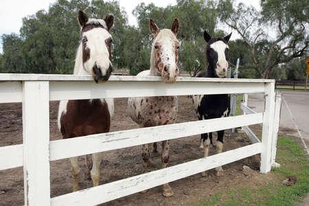 buddies: horse buddies