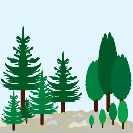 Vector graphic landscape or pines and cypress.