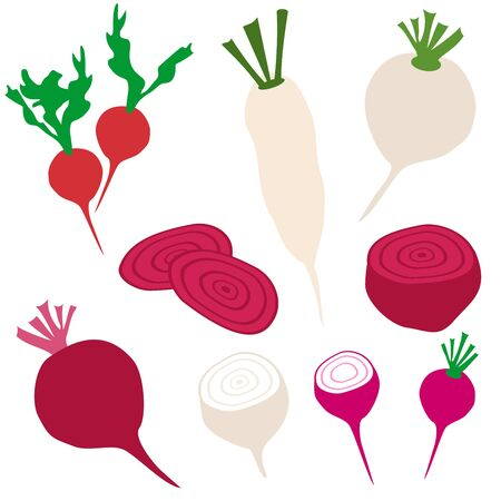 Set icons of radish and beet. Vector clipart of eco vegetables.