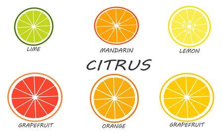 Citrus set isolated on white background. Fresh and juicy sliced citruses. Illustration fruit with flat design.