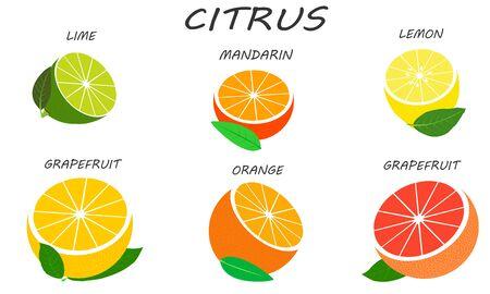 Citrus set isolated on white background. Fresh and juicy halves citruses. Illustration fruit with flat design.