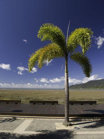 A plam tree near the boardwalk in Cairns Australia. Banco de Imagens