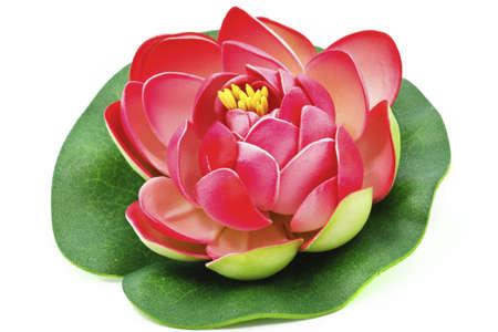 lirio acuatico: Flor de nen�far aislada sobre fondo blanco