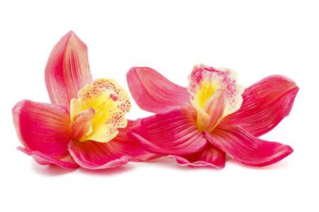 orchids: Bella rosa orchidea isolato su sfondo bianco