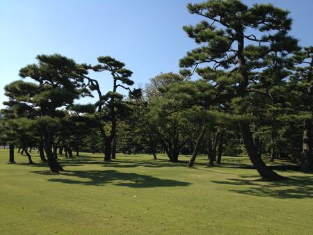 pine trees: Green field with pine trees Stock Photo