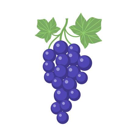 Trauben Clipart Cartoon mit Weinstock und Blättern. Lila Weinrebe. Vektorgrafik