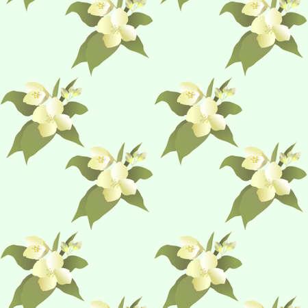 Vector abstract jasmine flower seamless pattern or texture Illustration