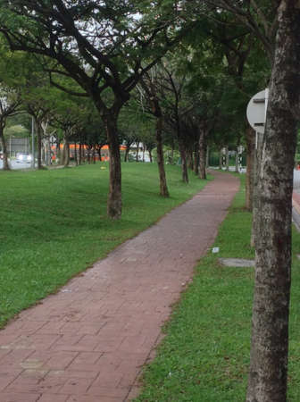 pedestrian walkway: Shady pedestrian walkway covered up by trees with green leaves