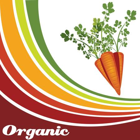 root vegetables: Carrot - Organic food background
