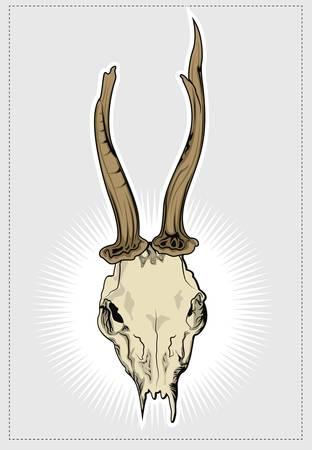 lejos: Deer cráneo