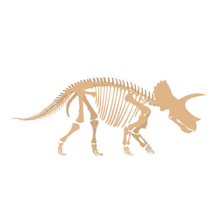 Cartoon dinosaur fossil Çizim