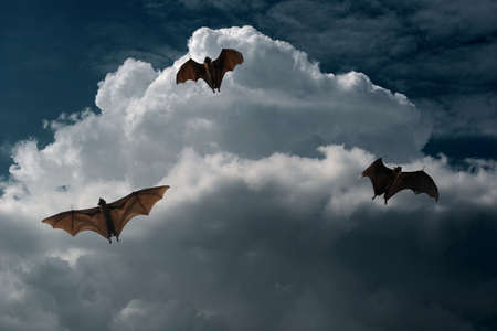 composing: flying foxes escaping from thunderstorm composing