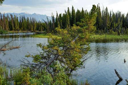 reclusion: lakeshore of a lake alaska Stock Photo