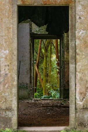 bekijken door middel van een ruïne in het regenwoud Azoren