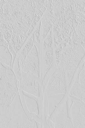 white background texture with gum tree