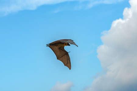 flying fox on thudufushi maldives Stock Photo