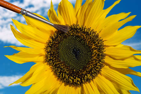 composing of a hand pollinating a sunflower with a brush