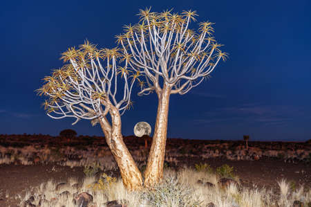 montage rising full moon quiver tree forest namibia