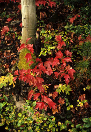 undergrowth: Fall leaves in a forest with tree trunk and undergrowth Stock Photo
