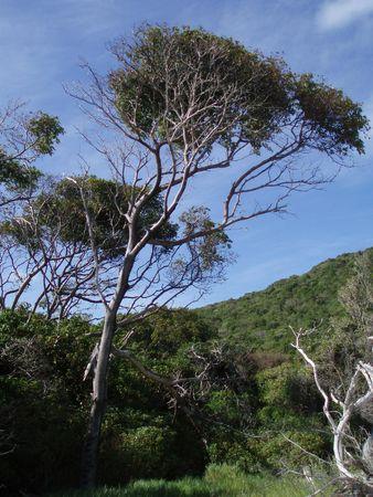 Tree on deserted Island
