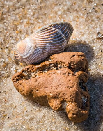 Closeup of a pair of washed-up sea-survivors