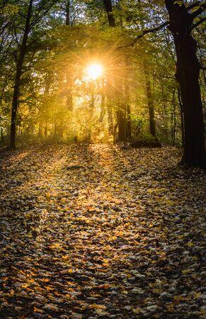 Bright sun filters through trees on Duryea Drive near the Reading Pagoda in autumn