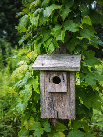 Tight shot of a wood bird house surrounded by lush green plants in Wyomissing Park