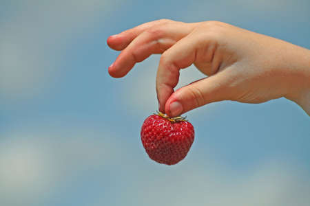 A hand holding a fresh picked strawberry against a blue sky background