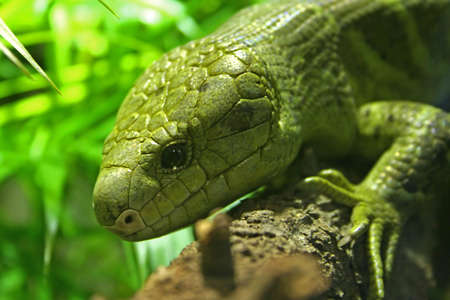 Lizard on a branch. photo