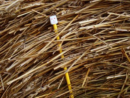 Un sonriente aguja en un pajar Foto de archivo - 3521766