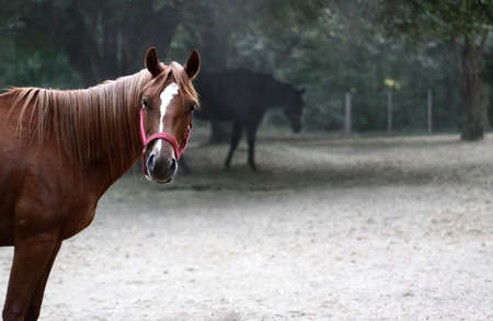A horse staring back at you from inside the corral Banco de Imagens