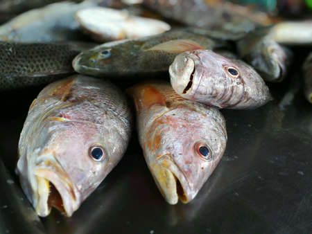 sandakan: Fresh fishes just caught from sea are being sold at a market in Sandakan, Sabah, Malaysia.