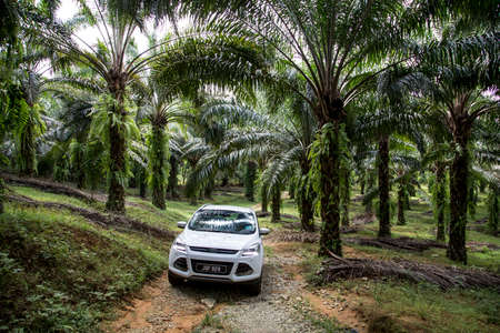 red palm oil: Ford Kuga drives off road at an oil palm plantation in Terengganu state.