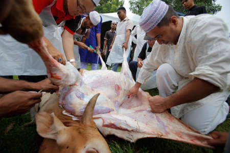 Muslims cut and separate beef after a cow was slaughtered during Eid Al-Adha Al Mubarak, the Feast of Sacrifice cerebration which held at  Masjid Muhammadiah, the Chinese Mosque in Ipoh, Perak, Malaysia.