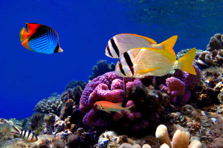Underwater image of coral reef and tropical fishes Stock Photo - 8576277