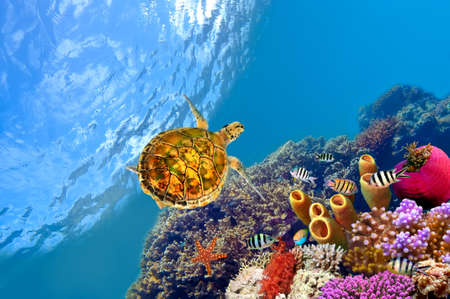 Tube Coral and turtle. shot in the Red Sea Stock Photo - 9421118