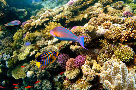 Underwater photo of a hard-coral reef,Red Sea, Egypt Stock Photo - 9421117